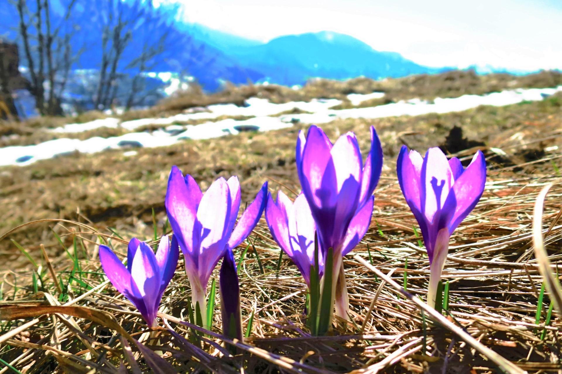 wiosna w Tatrach