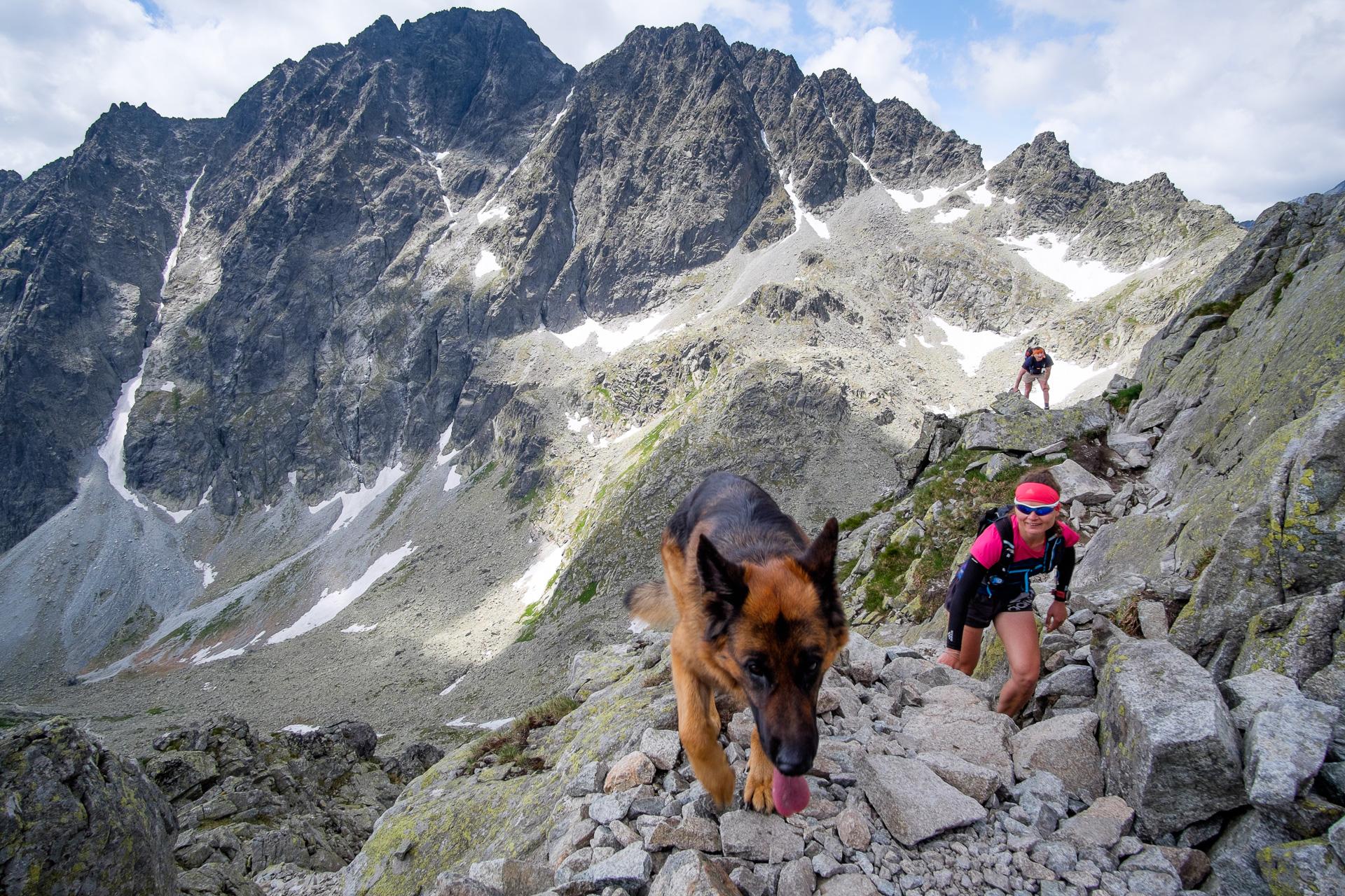 Mała Wysoka, Tatry, bieganie, biegaczka, owczarek niemiecki