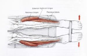 Odbracanie stóp z taśmą, ćwiczenia wzmacniające dla biegaczy